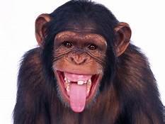 th Monkey